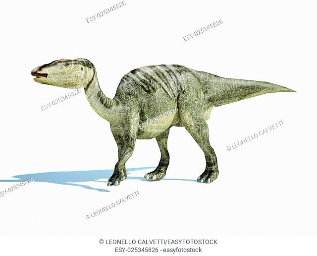 Photorealistic 3 D rendering of an Edmontosaurus. On white background with drop shadow and clipping path included