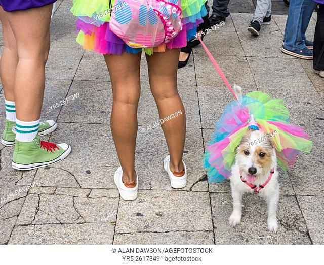 Dog fancy dress day at Las Palmas carnival on Gran Canaria, Canary Islands, Spain