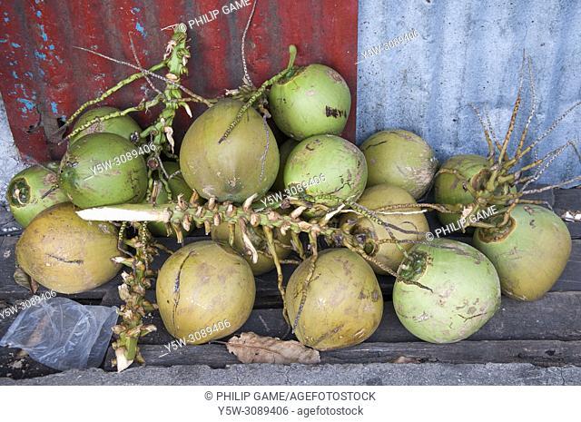 Fresh coconuts at Kampong Buli Sim Sim, a floating village outside Sandakan, Sabah, Malaysian Borneo