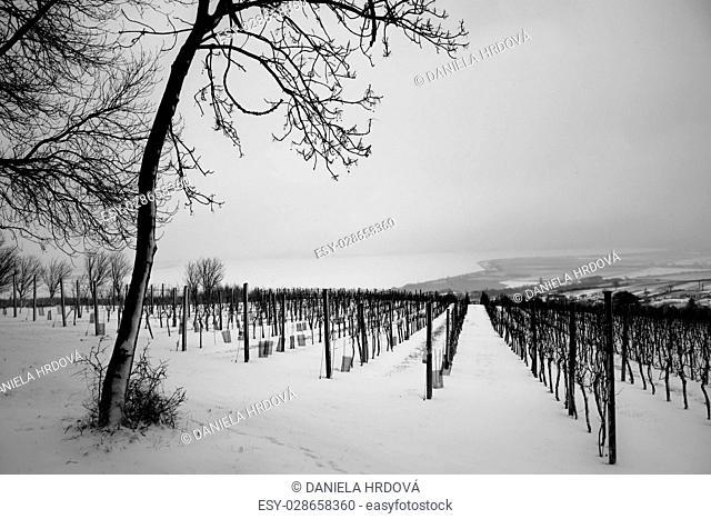 Palava, wine area, Czech Republic