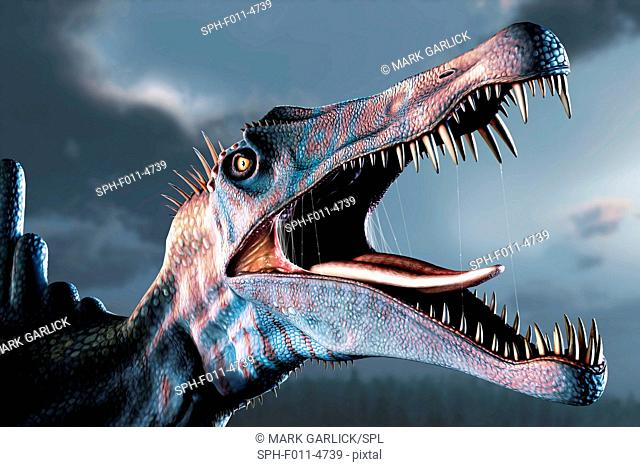 Spinosaurus (meaning 'spine lizard') was arguably the largest known meat-eating dinosaur. It was longer even than Tyrannosaurus and Giganotosaurus at