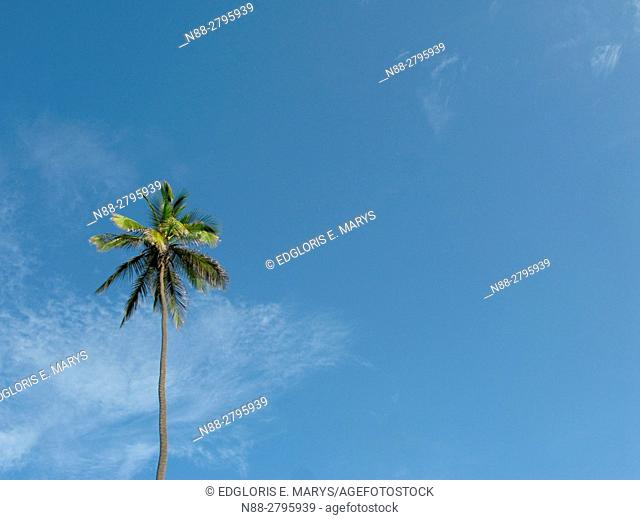 Palm tree against perfect blue sky
