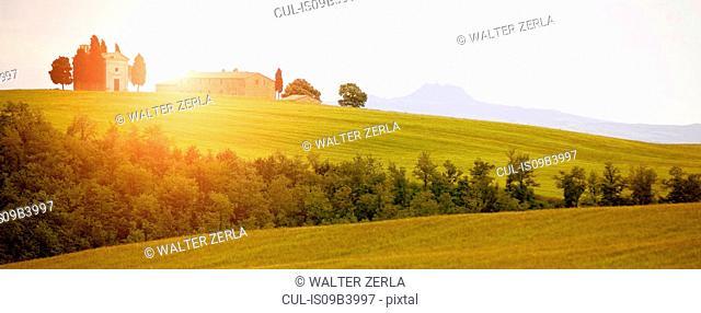 Lush green landscape, Val d'Orcia, Siena, Tuscany, Italy