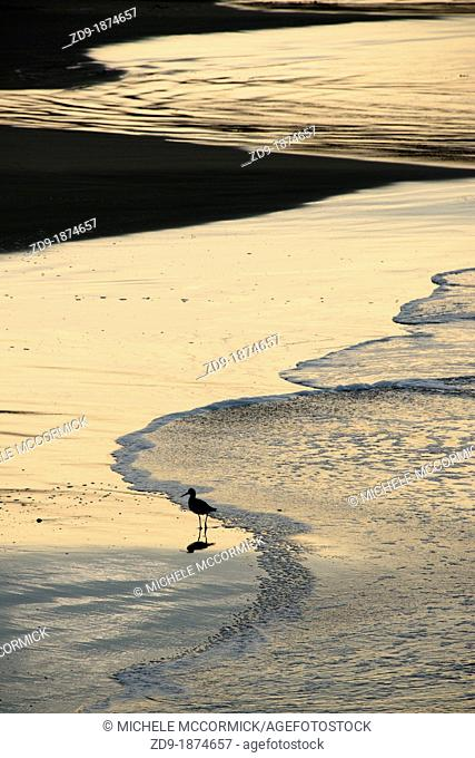 A shore bird is silhouetted against reflections from the dawn light