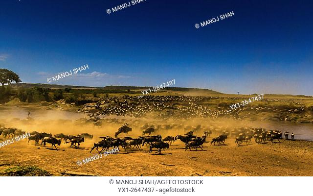 Wildebeests stirring up dust as they sun to cross the river