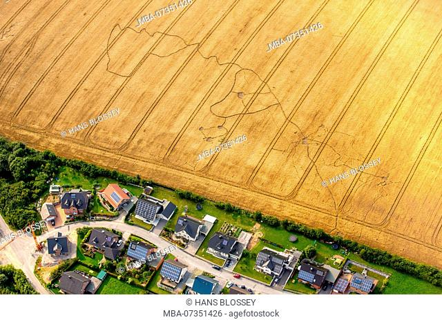 Cornfield with mole lines in the shape of a dog head, Sichtigvor, Warstein, district Soest, North Rhine-Westphalia, Germany