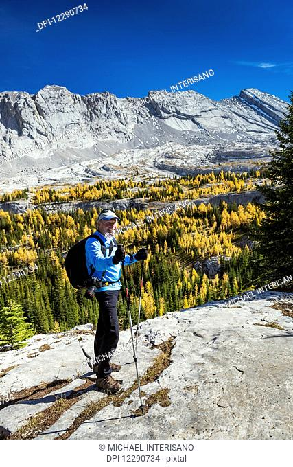 Male hiker with poles on rock ridge overlooking alpine valley with colourful larch trees in autumn and mountain cliffs with blue sky in the background