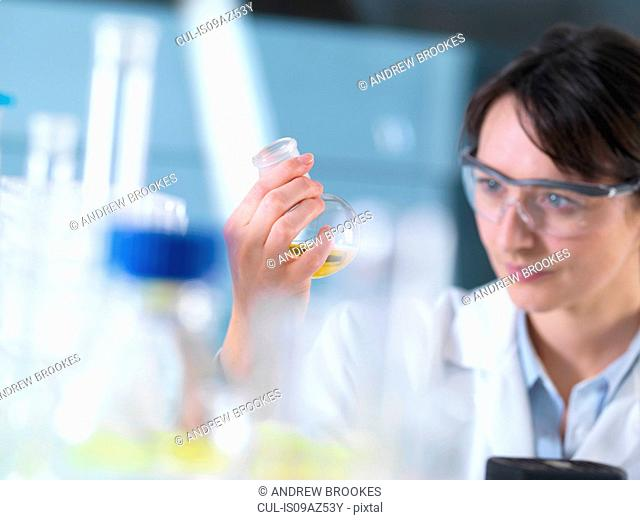 Scientist viewing chemical formula in beaker during experiment in laboratory