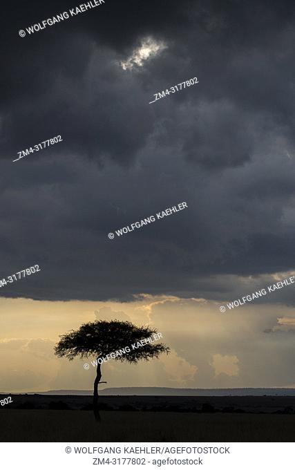 Dramatic dark storm clouds over a tree in the grasslands of the Masai Mara National Reserve in Kenya