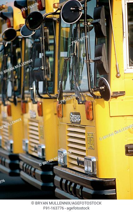Row of school buses. Oregon. USA