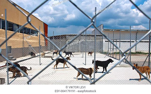 dogs shelter