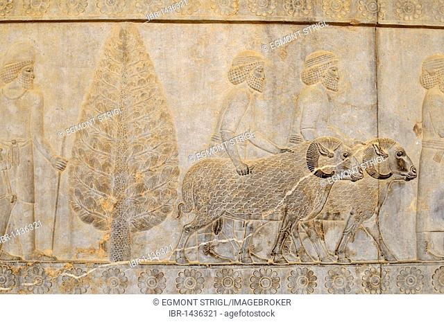 Bas-relief with sheep, rams on the Apadana Palace at the Achaemenid archeological site of Persepolis, UNESCO World Heritage Site, Persia, Iran, Asia