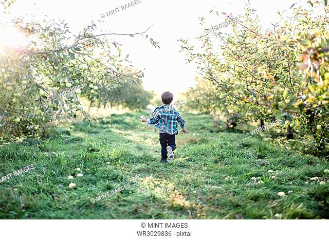 A child, boy, running through an orchard