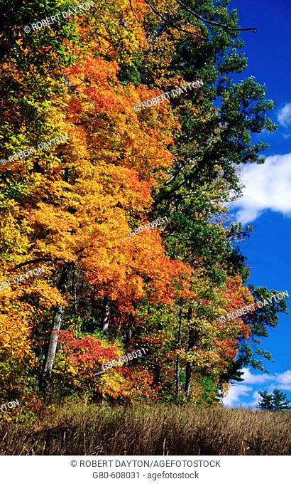Fall color. Ohio. USA