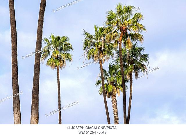 group of palm trees with partly cloudy sky