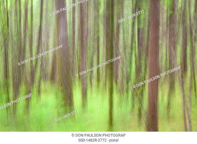 USA, Oregon, Columbia River Gorge, Elowah Falls Trail, Defocused view of tree trunks