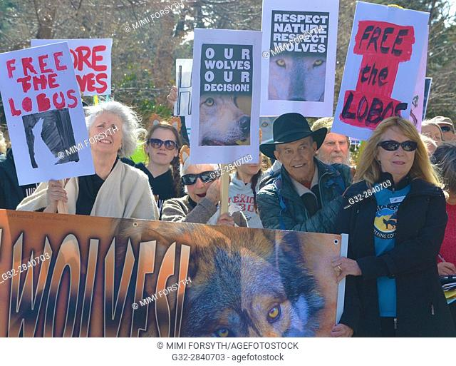 Demonstration to release more wolves in the wild, to benefit the gene pool. New Mexico, USA
