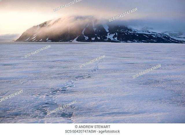 Pack Ice, Sheet Ice, Arctic Longyearbyen, Svalbard, Norway
