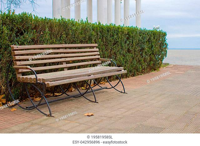 Free, empty bench. Rest in the park. Park over the sea. The seaside city. Street landscape