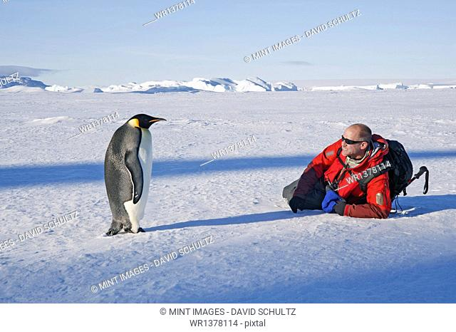 A man lying on his side on the ice, close to an emperor penguin standing motionless