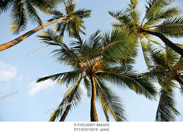 View of tall palm trees