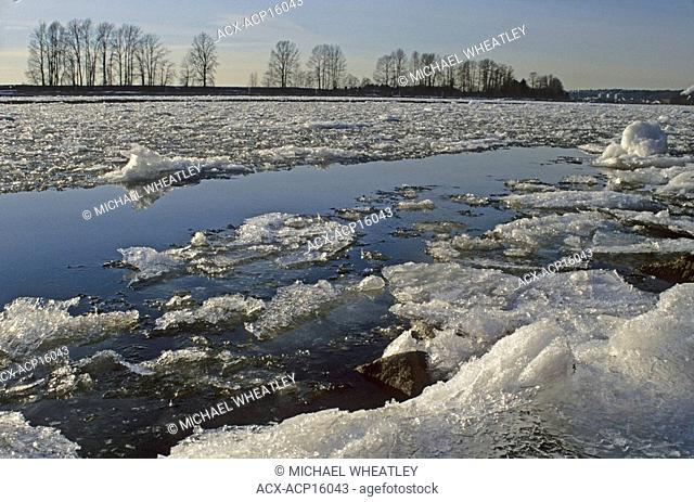 Ice in Fraser River at Fraser Foreshore Park, Burnaby, British Columbia, Canada