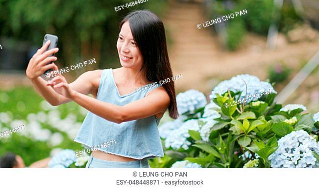 Woman taking photo on cellphone in Hydrangea field