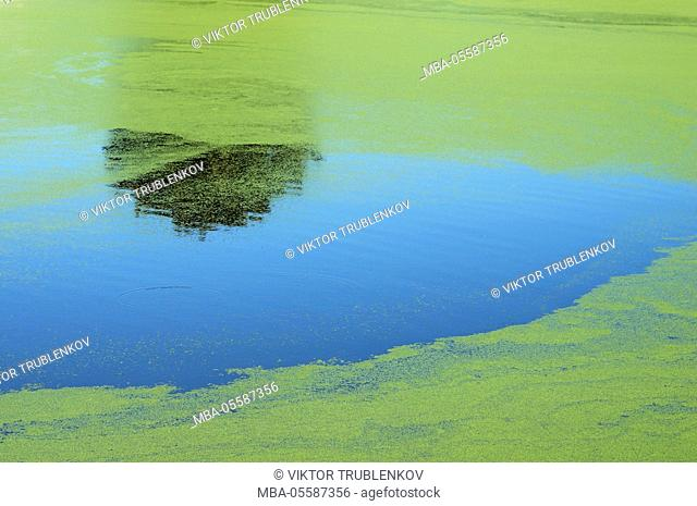 Natural Science, Reflection of the tree in the lumen of duckweed