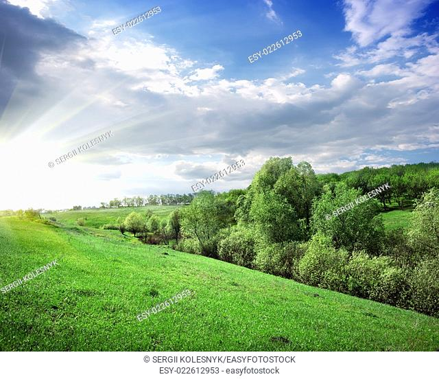 Sunbeams over the forest on the hill