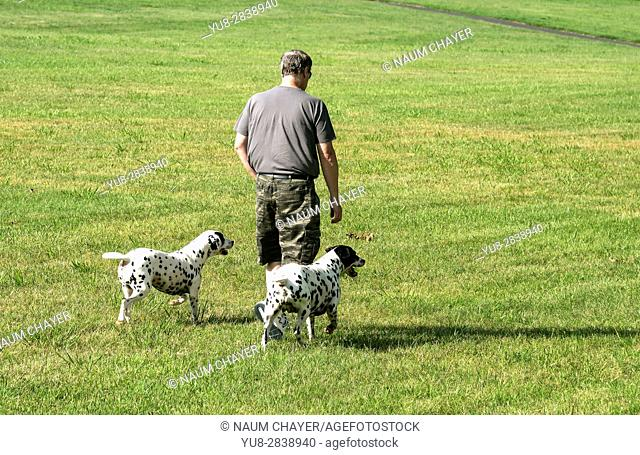 The man is walking his dogs