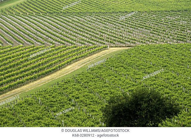 The Brancott Estate Winery in the Marlborough region near Blenheim, on the south island of New Zealand