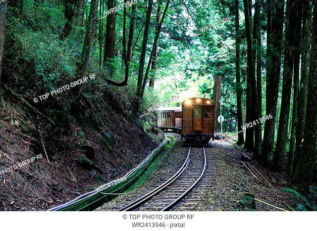 Trian Cypress trunk Ali Mountain Taiwan