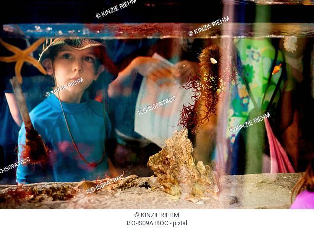View through salt water aquarium of young boy looking at starfish