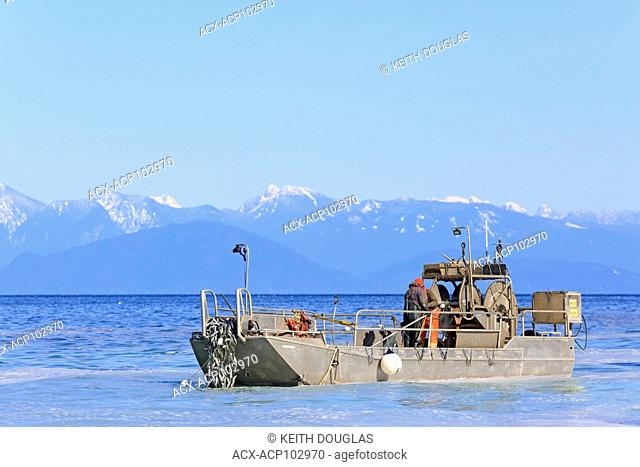 Herring fishery near Nanaimo, Vancouver Island, British Columbia