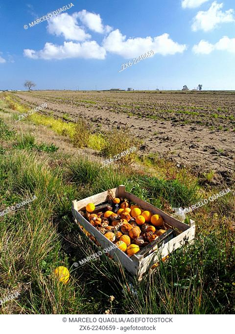 Abandoned box with oranges at rice fields. Ebro River Delta Natural Park, Tarragona province, Catalonia, Spain