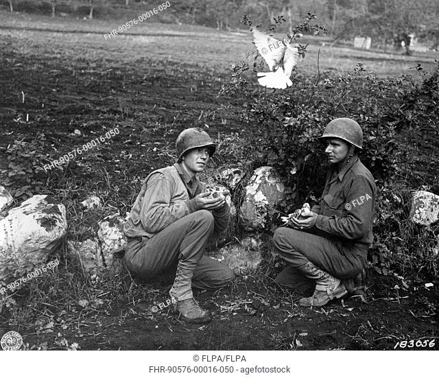 American soldiers from Divisional Signal Company, releasing courier pigeons on frontline during World War Two, near Liberi, Campania, Italy