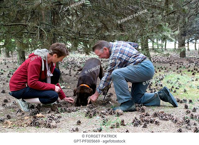 GATHERING WHITE TRUFFLES WITH JACK AND CHRISTELLE BOIS AND THEIR LABRADOR JULIE, NOTTONVILLE (28), FRANCE