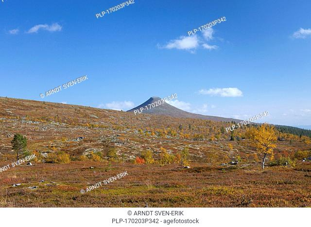 The mountain Nipfjaellet in the Städjan-Nipfjället nature reserve in autumn, Dalarna, Sweden, Scandinavia