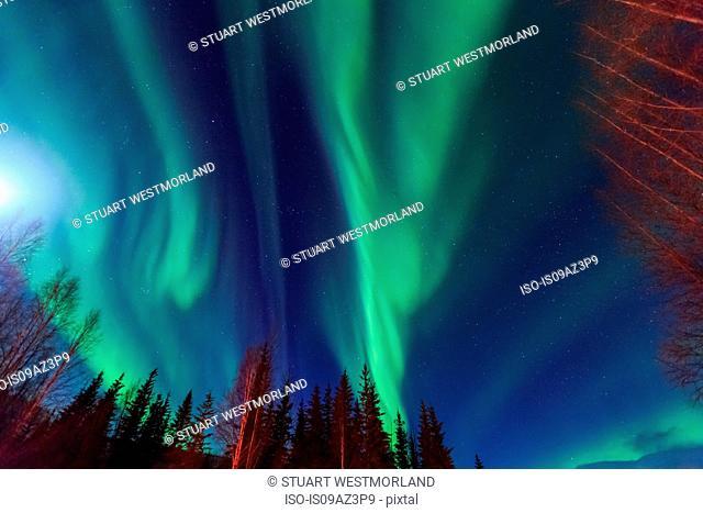 Aurora borealis, Northern Lights above Hot Springs Road, near Chena Resort, near Fairbanks, Alaska