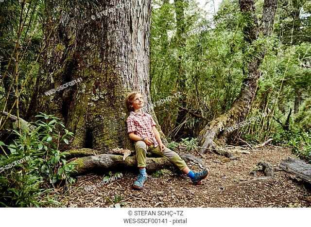 Chile, Puren, Nahuelbuta National Park, smiling boy sitting at a tree in forest looking up