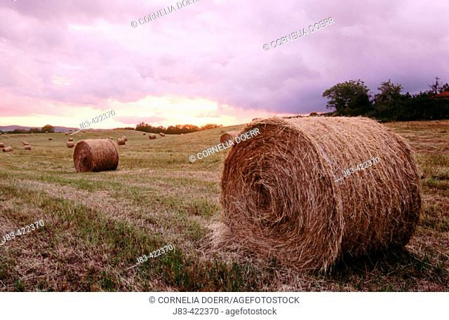 Bale of straw at sunset. Val d'Orcia. Tuscany. Italy