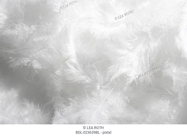 close-up of white feathers