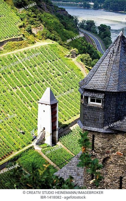 Vineyard near Bacharach, Mittelrheintal valley, Rhineland-Palatinate, Germany, Europe