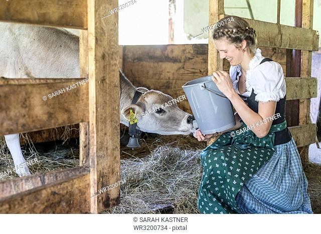 Farmwoman wife with dirndl feeds a calf