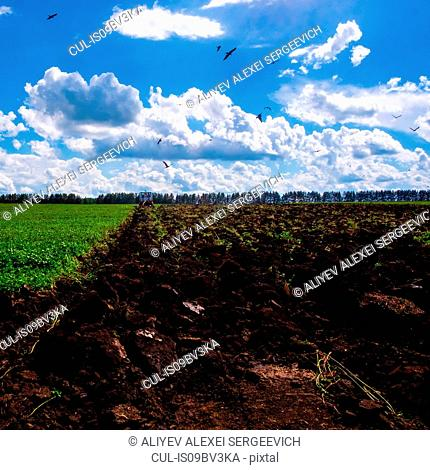 Tractor ploughing field with birds overhead