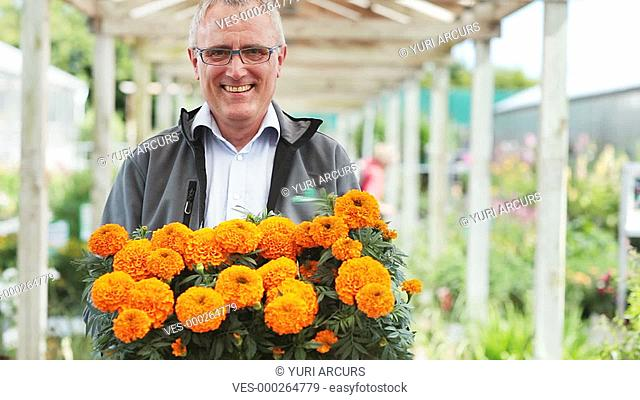 Senior man in a plant nursery proudly displaying a tray of fresh marigolds