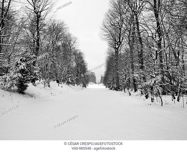 -Winter in Shonbrunn Park- Wien(Austria)