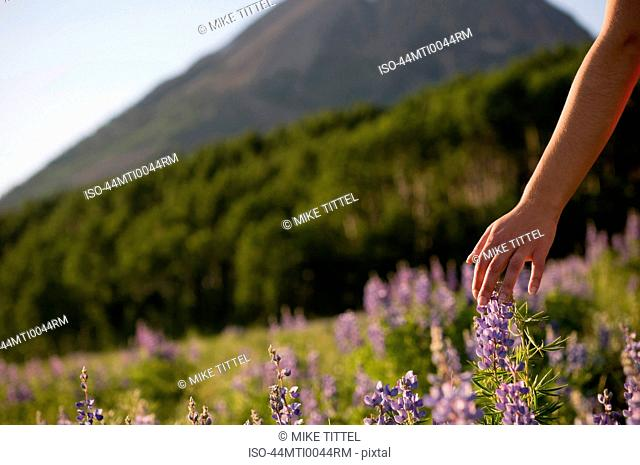 Womans hand in field of flowers