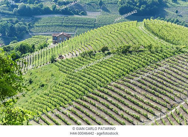 Italy, panorama of vineyards of Piedmont, Langhe-Roero and Monferrato on the World Heritage List UNESCO Italy, Piedmont, Vieneyards