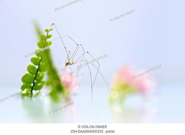 Delicate spider, close-up